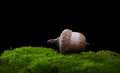 Acorn On Moss Royalty Free Stock Images - 91954889