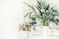 Pretty Indoor Plants On White Table, Home Interior Stock Images - 91962234