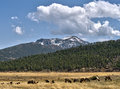 Elk Herd And Rocky Mountain National Park Vista Royalty Free Stock Photo - 91977555