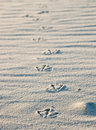 Bird Footprints In Sand Stock Images - 927454