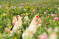 Summer Pedicure Royalty Free Stock Image - 9201866