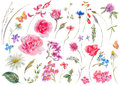 Watercolor Set Of Vintage Floral Summer Natural Elements. Royalty Free Stock Photo - 92024595
