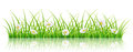 Spring Banner With Green Grass And White Daisy Flowers Stock Images - 92092844