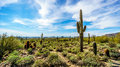 The Semi Desert Landscape Of Usery Mountain Reginal Park With Many Saguaru, Cholla And Barrel Cacti Stock Photos - 92117803
