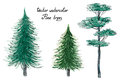 Vector Watercolor Pine Trees Stock Image - 92127521