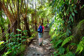 Tourist Hiking On Kilauea Iki Trail In Volcanoes National Park In Big Island Of Hawaii Stock Photos - 92142223