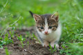 Walking Small Kitty Royalty Free Stock Photos - 92146668