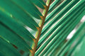Palm Leaf Macro Stock Images - 92264934