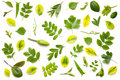 Green Leaves Isolated On White Background Royalty Free Stock Image - 92291056