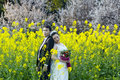 Chinese Couple Wedding Portraint In Cole Flower Field Stock Images - 92398094