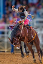Mystery Cowboy Bucks On Wild Mustang In Florida Rodeo Royalty Free Stock Photos - 92426508