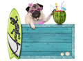 Pug Dog With Blue Vintage Wooden Beach Sign, Surfboard And Summer Watermelon Cocktail, Isolated On White Background Stock Photo - 92458420