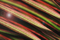 Abstract Colorful Line In Nature Royalty Free Stock Photos - 92466588
