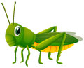 Green Grasshopper On White Background Stock Image - 92492781