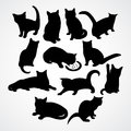 Clear Silhouettes For Cats And Kittens Stock Images - 92498794