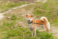 Walk  Dog On A Leash In The Park Stock Image - 92538201
