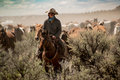Cowboy Leading Horse Herd Through Dust And Sage Brush During Roundup Stock Image - 92541941