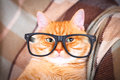 Cute Red Cat With Glasses Close-up. Stock Photo - 92574970