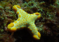 Mutated Sea Star Or Starfish With 4 Legs Royalty Free Stock Photography - 9263337