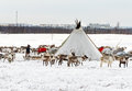 Musher Of Nenets Nationality Makes A Nomad Camp At An Outskirts Of Labytnangi City. Royalty Free Stock Photos - 92603388
