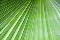 Greenery Background Close Up Palm Leaf Stock Photo - 92603950