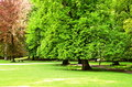 Spring Trees Are Green In The Park Stock Photo - 92617590