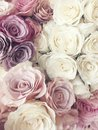 Beautiful Vintage Rose Background. White, Pink, Purple, Violet, Cream Color Bouquet Flower. Elegant Style Floral. Royalty Free Stock Photo - 92680105