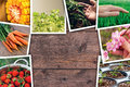 Agriculture Photo Collage Royalty Free Stock Images - 92699519