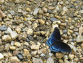 Red Spotted Purple Butterfly On Sand And Stones Royalty Free Stock Photos - 92713788