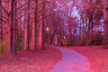 Footpath In Piedmont Park In Beautiful Twilight Glow, Atlanta, USA Stock Photography - 92751122