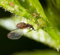 A Small Aphid On A Green Plant Royalty Free Stock Image - 92767796
