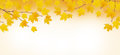 Autumn Branches With Yellow Leaves Royalty Free Stock Images - 92774129