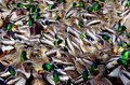 A Group Of Feeding Ducks Makes A Confusing Pattern Royalty Free Stock Images - 92780309