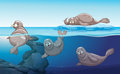 Seals Swimming In The Ocean Stock Image - 92785251