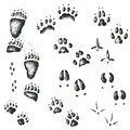 Vector Set Of Walking Wild Wood Animal And Bird Tracks Stock Photography - 92847562