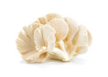 Oyster Mushroom On White Background. Mushroom Brown Isolated. An Stock Photography - 92851052