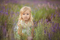 Pretty Cute Little Girl Is Wearing White Dress In A Lavender Field Holding A Basket Full Of Purple Flowers Royalty Free Stock Image - 92854996