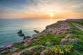 Wild Flowers On Cornish Cliffs Royalty Free Stock Image - 92871606