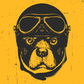 Portrait Of Rottweiler With Vintage Helmet. Royalty Free Stock Photography - 92887637