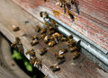 Bee Hive Royalty Free Stock Photography - 9293587