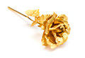 Gold Rose As A Prensent Close Up On White Stock Images - 92901874