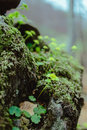 View Of Moss In The Forest Royalty Free Stock Images - 92934409