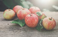 Red And Yellow Apples Harvest In Fall Garden Royalty Free Stock Image - 92951766
