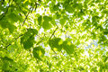 Green Leaves Background Stock Photography - 93093092