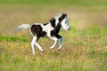 Cute Pony Foal Royalty Free Stock Image - 93097096