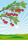 Cherries Ripened In A Garden Royalty Free Stock Image - 9314016