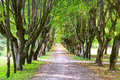 Walking Alley Between Green Trees Royalty Free Stock Photos - 93169388