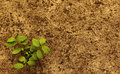 Plant With Soil Stock Photo - 93176140