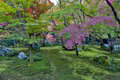 Lush Foliage Of Japanese Maple Tree During Autumn In A Garden In Kyoto, Japan Stock Photo - 93203700