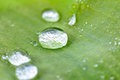 Water Drop On The Grass Blade Morning Dew. Royalty Free Stock Photography - 93287097